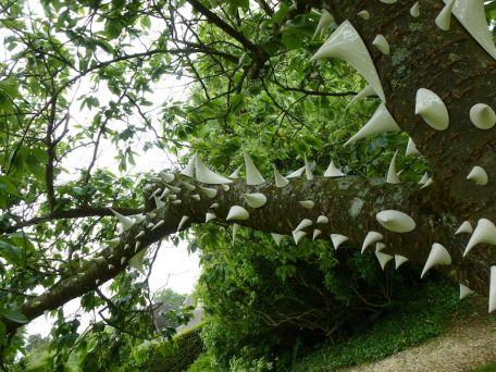 Natalia Dias, Thorn Tree