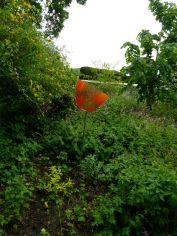 Colin Reid, Strange Flower