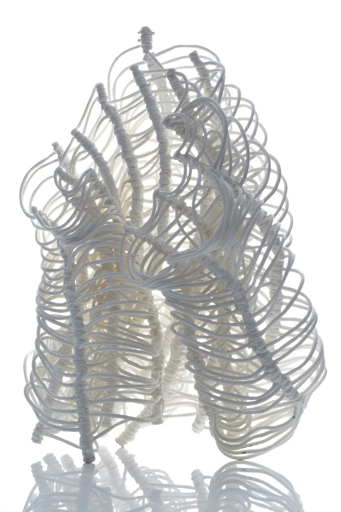 038. Banksia Dancing