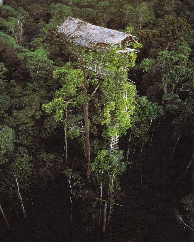 The Korowai Tribe's Incredible Tree Houses